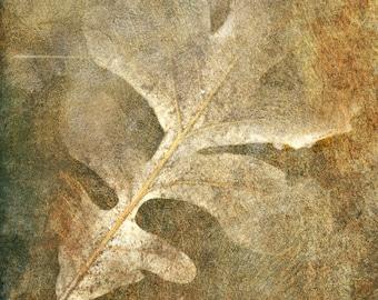 nature photography leaf autumn brown fine art photography home decor office decor