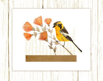 Blackburnian Warbler Print -- bird art -- bird art 52 birds stephanie fizer coleman illustration yellow bird