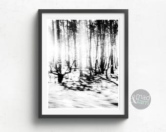 Forest Wall Art, Trees Photography Print, Printable Art, Woodlands Decor, Forest Decor, Black And White Print, Forest Printable, Modern Art