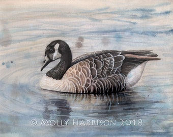 Canada Goose - Canadian Geese Wildlife Watercolor Fine Art Print by Molly Harrison 8 x 10