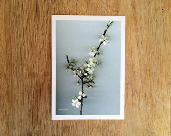 "Map postcard tree flowers ""Hawthorn"". Ref: F - 1"