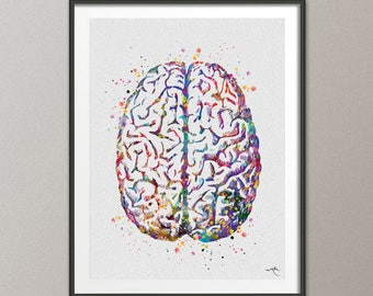 Brain Anatomy Watercolor Print Medical Art Science Art Anatomy Art Neurology Human Brain Doctor Gift Nurse Science Poster Psychological -971