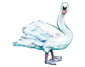 Mute Swan | Original Painting