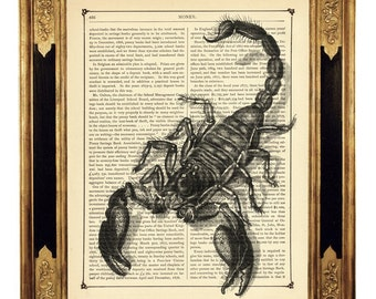 Black Scorpion Art Print Insect Gothic  Steampunk - Vintage Victorian Book Page Art Print Gift for Him