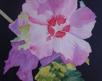 floral watercolor: pink hibiscus