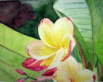 Plumeria Floral watercolor painting - wall art