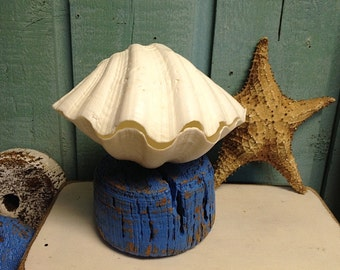 Large Clam Shell Bowl Jewelry Tea Light Holder by CastawaysHall - READY TO SHIP