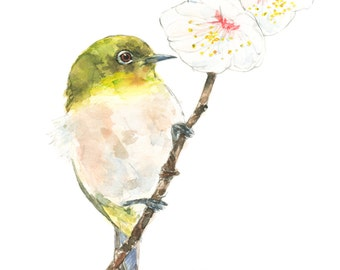 Japanese White-eye watercolor painting - bird watercolor painting - 5x7 inch print - 0059