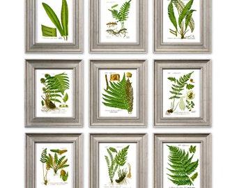 Fern antique print Set of 9 Botanical illustration print fern plant nature wall art decor dorm room decor living room decor SET OF 9 8x12