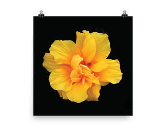 Photo paper poster: Yellow Double Hibiscus