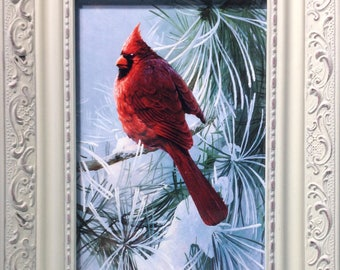 Framed Print - Cardinal in Pines