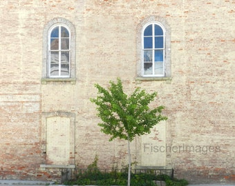 Old arched windows on old brick building with lone tree.