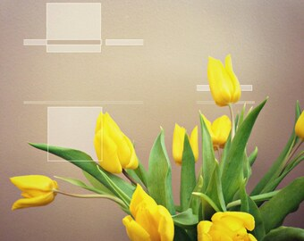 Tulips - digital drawing on my photograph - Abstract still life Flowers