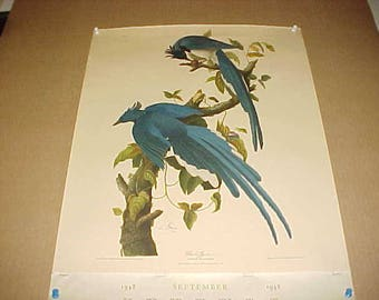 Lithograph Audubon Bird Print Columbia Jay From 1948 Calendar
