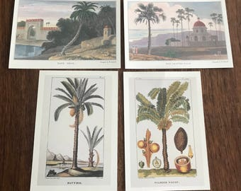 100 Postcards of Date and Palm Trees Natural History Printed in Italy on cream cardstock