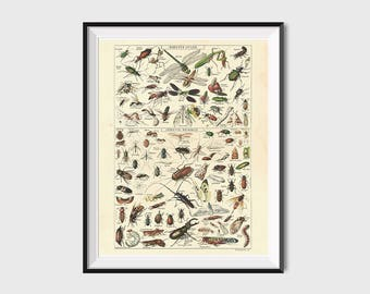 Printable Wall Art Vintage Insect Print, 8x10 Dictionary Art Print Antique Science Poster, Vintage Art Prints, Insect Bug Illustration Print