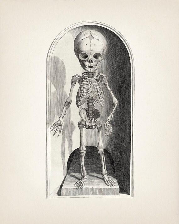 1685 Child Skeleton Pair Scientific Anatomy Drawing HU-01