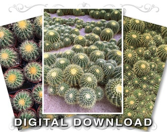 3 Barrel Cactus Stock Photography Photos | Background Cactus Clip Art Images | Instant Download | Small Business / Commercial Use | Cactus01