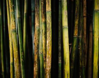Bamboo Stalks Photography Print 5x7 8x10 8x12 Travel Abstract Green Plant Australian Bamboo