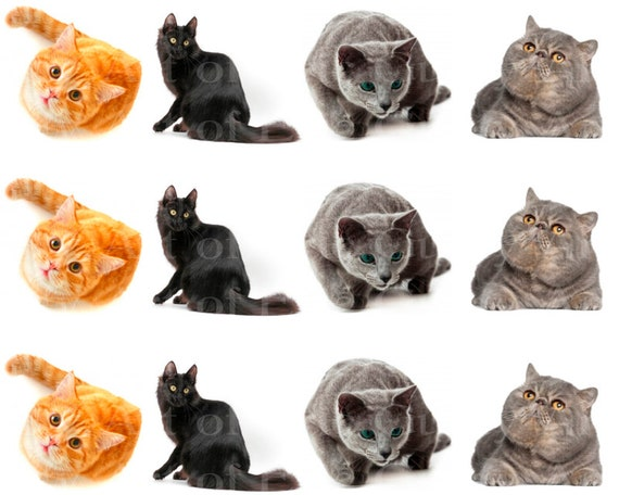 Assorted Cats Birthday - Edible Cake Side Toppers- Decorate The Sides of Your Cake! - D24055
