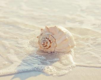 seashell photography, beach photograph, white home decor, nature wall art, beach cottage art, spiral, whelk, ocean photography