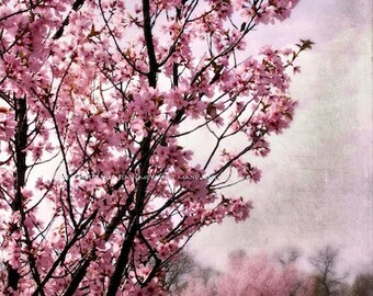PINK BLOSSOM SPRING Original Color Art Photograph Print Wall Art Home Decor