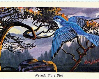 Vintage Nevada Postcard - Mountain Bluebird ... State Bird of Nevada -- Artist Signed, Ken Haag (Unused)