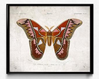 Butterfly Vintage Print 8 - Butterfly Poster - Butterfly Art - Moth Art - Home Decor - Home Art - Kitchen - Kitchen Art - Orbigny