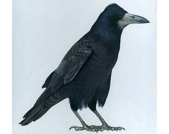Giclee Fine Art Print of Original Oil Painting of a Rook