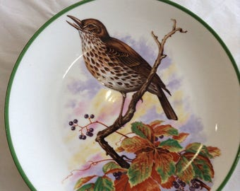 Collectable Song Thrush Plate.