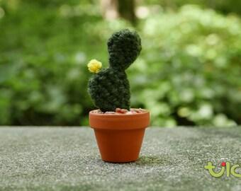 S - Beavertail Cactus