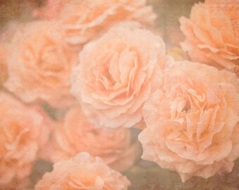 Orange Roses - 8x10 photograph - fine art print - nature - nursery art - orange flowers - vintage home decor