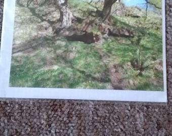 Tree Goyt valley