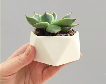 Flat Icosahedron Geometric Ceramic Pot
