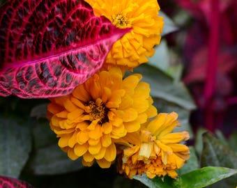 Vancouver Flora - Queen Elizabeth Park Flowers - Bright and Beautiful