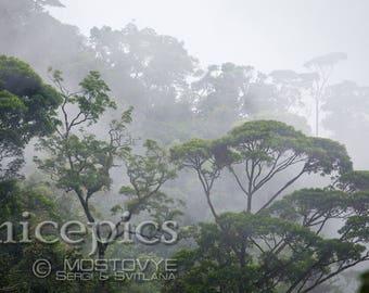 Jungle mistige bos op de mist downloadbare digitale kunst print