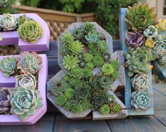 UNPLANTED DIY Monogrammed Letter Succulent Planter! Plant yourself