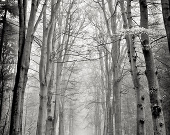 the woods #156