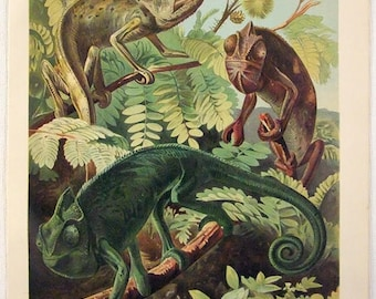 Chameleons - Original 1905 Chromo-Lithograph by Meyers. Chamaleon
