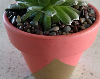 Tiny pots with cobweb hens and chicks