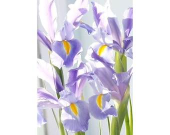 Iris Flower Photography, Still Life Art, Iris Floral Wall Art, Purple  Wall Decor, Bedroom Art, Floral Print, Flower Art