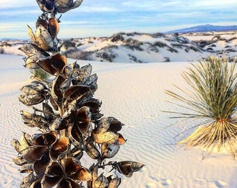 White Sands National Monument, New Mexico Art Photography Print
