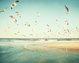 "Birds Flying Photography - seagulls ocean mint green beach print sea teal blue turquoise beige yellow beige shore, 11x14, 8x10, ""Freedom"""