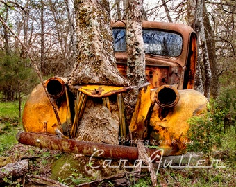 1941 Ford 1 Ton Truck with Tree Growing through Grill Photograph