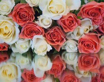 Flower print - Rose print - Rose photo - Wall Art - Home Decor - Flower Gift - Flower photo - Nature Print - Nature Photo - Flower Decor