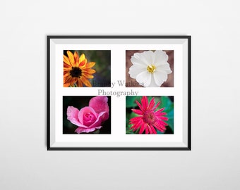 Flower photography prints, nature photography, 4x6 prints, postcards, rose photograph, sunflower wall decor, wall decor, flower decor