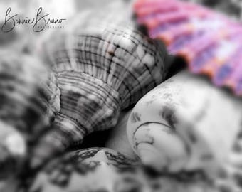 Color Splash nature photography - bw shells with one pink shell - archival photographic print for home or office