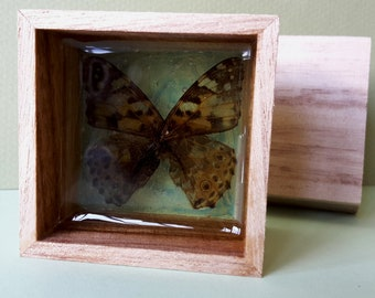 Butterfly In Resin| Butterfly Wings Resin Art| Butterfly Wing Exhibition In Resin