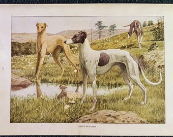 Greyhounds by Louis Agassiz Fuertes 1919 Color Animal Print Delightful Vintage Wall Art Hanging Antique Book Page Illustration Wall Decor