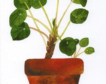 Pot plant 05, Roślinka w doniczce 05 - print 12,5x18cm